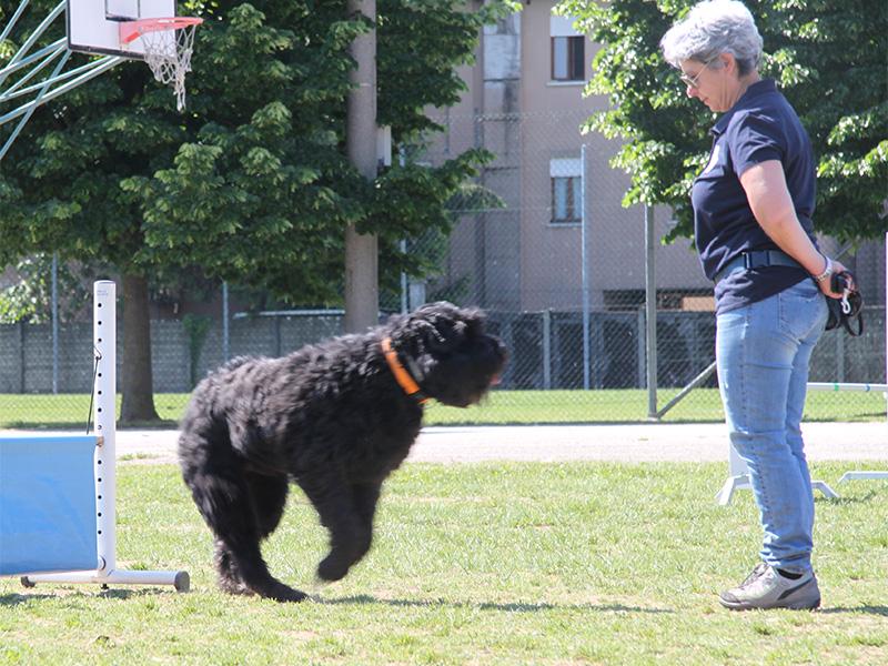 cane e proprietario durante la gara