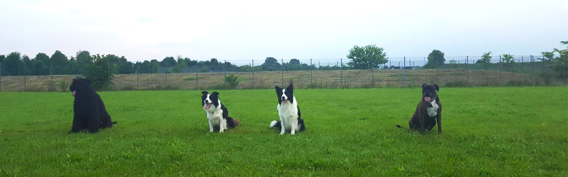 cani in attesa di iniziare le attivita