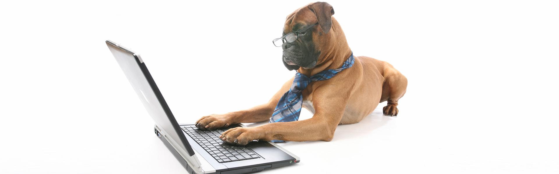 cane con computer