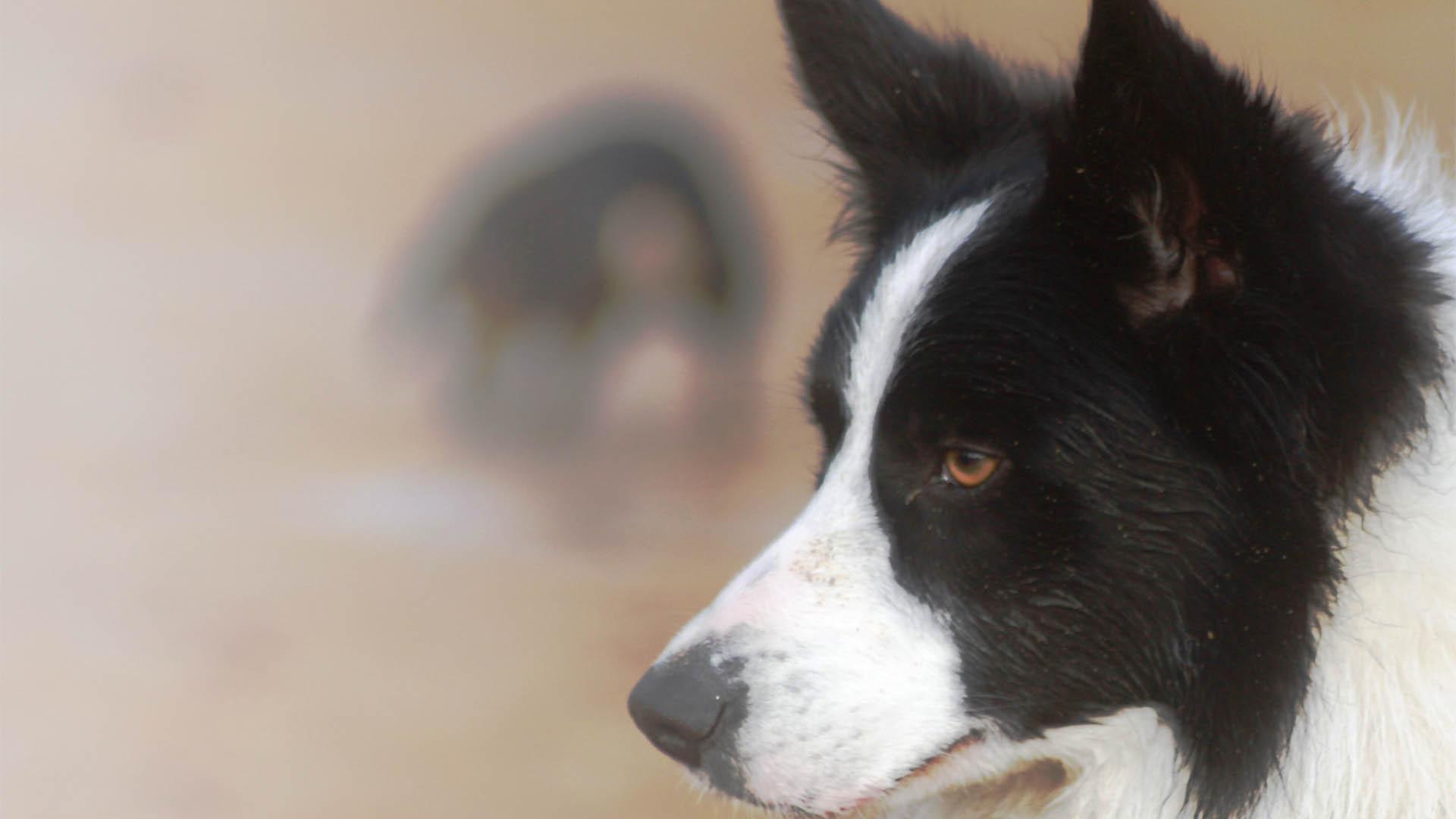 primo piano di cane